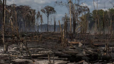 Photo of Em menos de uma hora, deputados de Rondônia acabam com mais de 5 bilhões de m2 de áreas protegidas