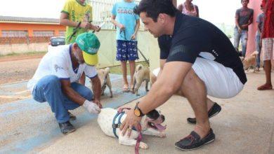 Photo of Vacinação contra raiva continua por mais 10 dias em Vilhena