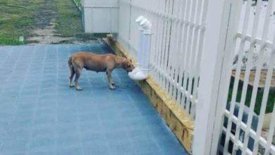Photo of Juíza apaixonada por animais instala comedouro e bebedouro para cães no Fórum em cidade de Rondônia