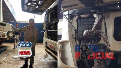 Foto de Cobra é capturada pelo Corpo de Bombeiros enrolada em radiador de caminhão em Vilhena