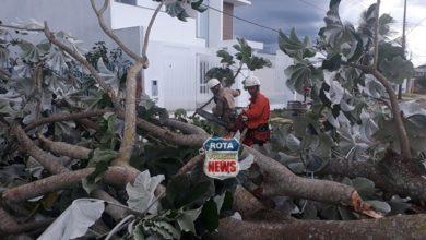 Photo of Árvores caem durante chuva mobilizando Corpo de Bombeiros e PRF em Vilhena