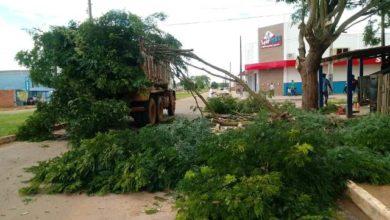 Photo of Prefeitura faz poda de árvores e busca sanar problema  crônico com espécie imprópria