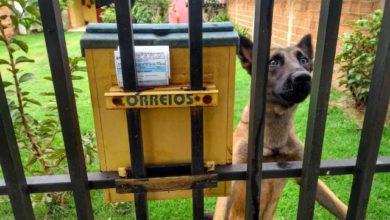 Photo of Servidores do SAAE relatam ataques de cães ao entregar faturas e pedem ajuda da população