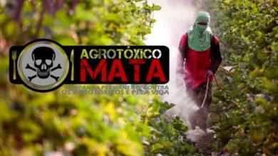 Photo of Ministério Público investiga intoxicação por agrotóxico em Vilhena