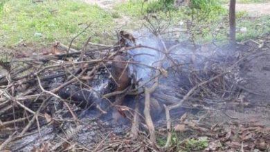 Foto de Vídeo: suspeito de estuprar a própria filha é queimado vivo – IMAGEM FORTE