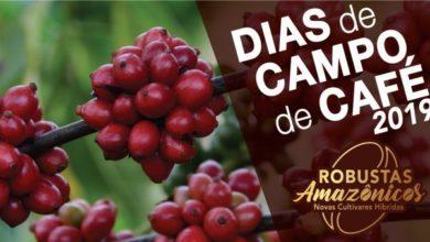 Foto de Embrapa apresenta novas cultivares híbridas de café em dias de campo em Rondônia e no Acre