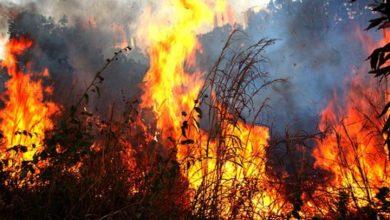 Photo of Lei Municipal endurece multas contra queimadas e valores podem chegar a R$13,7 mil em Vilhena