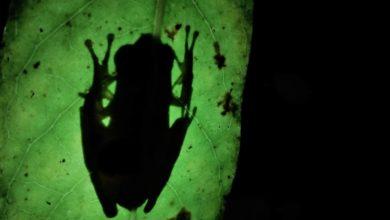 Photo of Semma divulga nova página oficial no Dia Mundial do Meio Ambiente
