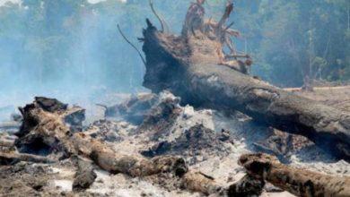 Photo of Queimadas e desmatamento são responsáveis por aumento de focos de calor em Rondônia, alerta SEDAM