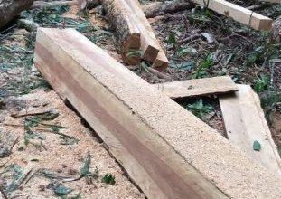 Photo of Suspeitos são presos por extração ilegal de madeira em área indígena no município de Comodoro