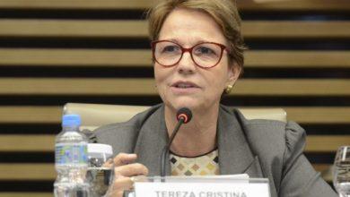 Photo of Ministra da Agricultura assinará contrato de concessão florestal, em Porto Velho