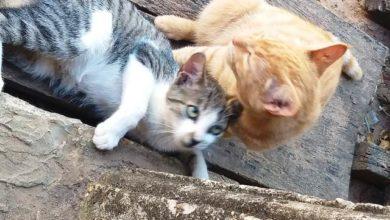 Photo of Adote um gato castrado e bem cuidado agora mesmo