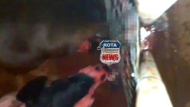 Photo of Morador filma vídeo de pitbull atacando e matando outro cachorro dentro de quintal em Vilhena