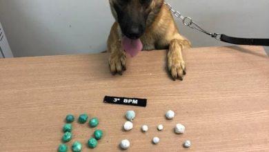 Photo of Com apoio de cão farejador, Polícia Militar de Colorado do Oeste apreende drogas e celulares com reeducandos do semiaberto
