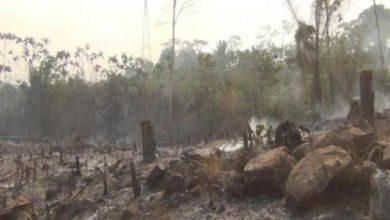 Photo of Corpo carbonizado é achado em área desmatada