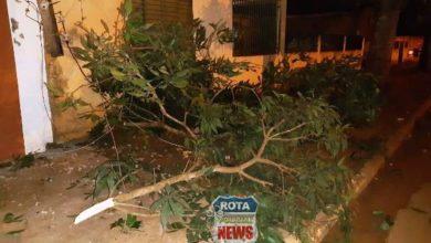 Photo of Caminhão quebra galho de árvore e derruba poste com padrão de energia em Vilhena