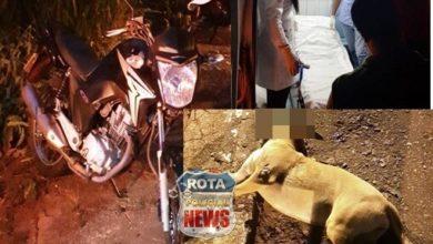 Photo of Motociclista atropela e mata cachorro na BR-435 e sofre ferimentos