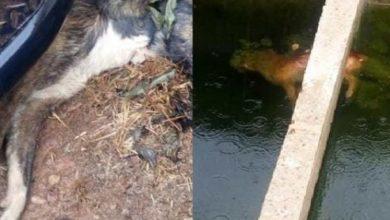 Photo of Crueldade: Cachorros estão sendo mortos a pauladas nos arredores do presídio