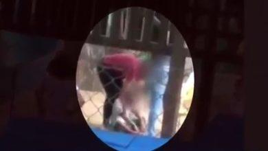 Photo of Pedagoga é demitida após agredir criança em escola pública