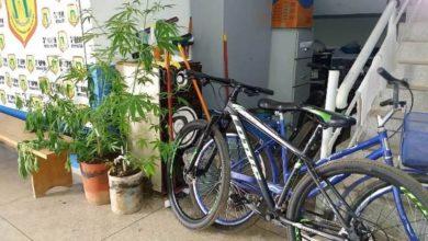 Photo of Polícia recupera objetos furtados e apreende plantações de maconha ao investigar suposto espancamento