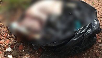Photo of Na capital, cachorro encontra feto dentro de saco plástico em calçada