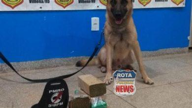 Photo of Duque, o cão farejador da PM de Colorado localiza quase 3 kg de maconha em ônibus