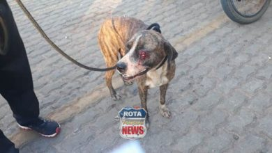 Photo of Reportagem aciona a Polícia Militar após atropelamento de cachorro em posto de combustível em Vilhena