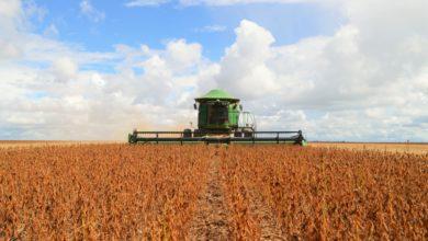 Foto de Com 295 mil toneladas, Vilhena é o município de Rondônia que mais exporta soja; Porto Velho é 10º colocado