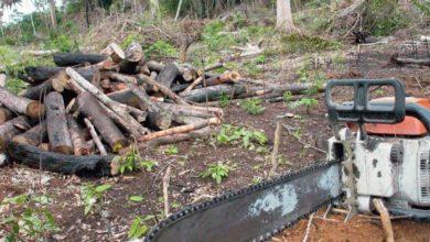 Photo of Agricultor deverá pagar R$900 de multa após ser preso por extração ilegal de madeiras