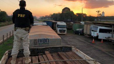 Photo of PRF em Rondônia registra aumento expressivo nas atividades de enfrentamento aos crimes ambientais
