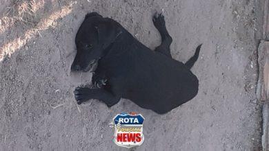Foto de Após morte de 20 gatos em Chupinguaia, dois cães também morrem envenados e vizinhos cobram ações da Polícia