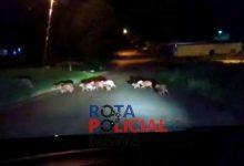 Foto de Família de capivaras é flagrada por vilhenense em Colorado do Oeste